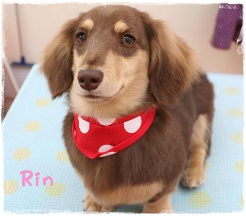 rin6_20120524110001.jpg
