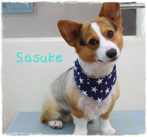 sasuke3_20120425143554.jpg