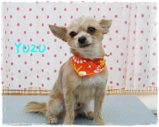 yuzu8_20120229153540.jpg