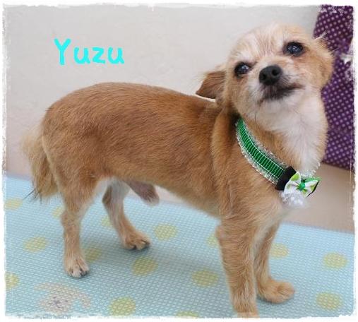 yuzu8_20120627132453.jpg