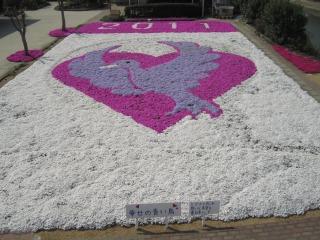 芝桜2011(1)