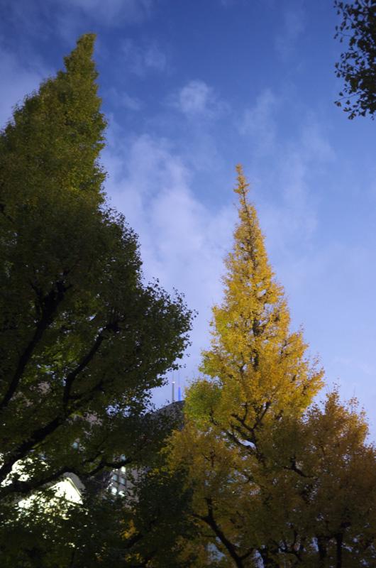 2011_1123CV.jpg