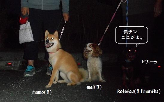 アンヨの散歩 1
