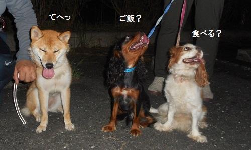 アンヨの散歩2