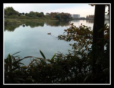 つろぎ 池