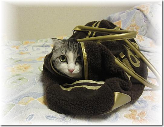 アディダス猫