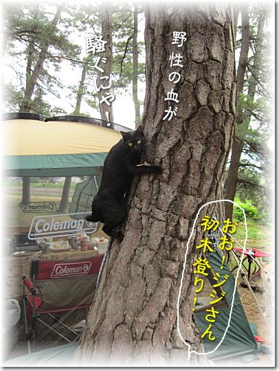 ジジの初木登り