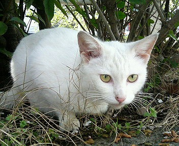 x-cat 1