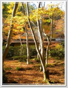 DSCN06142010-11-26eve19.jpg