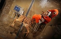Giraffe-dissection_1373563c.jpg
