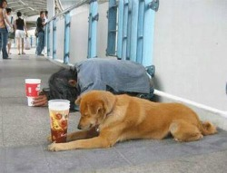 Homeless-Dog-Beg.jpg