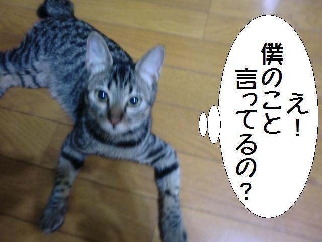 100916_1.jpg