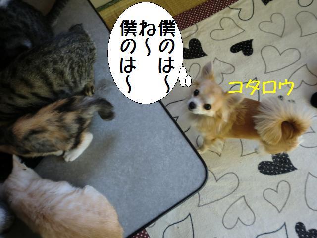 101129_2.jpg