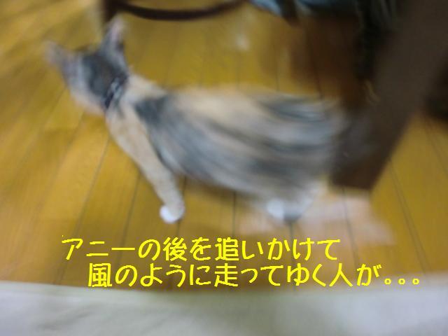 101129_4.jpg