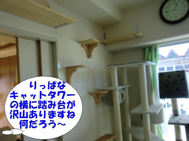 110110_3.jpg