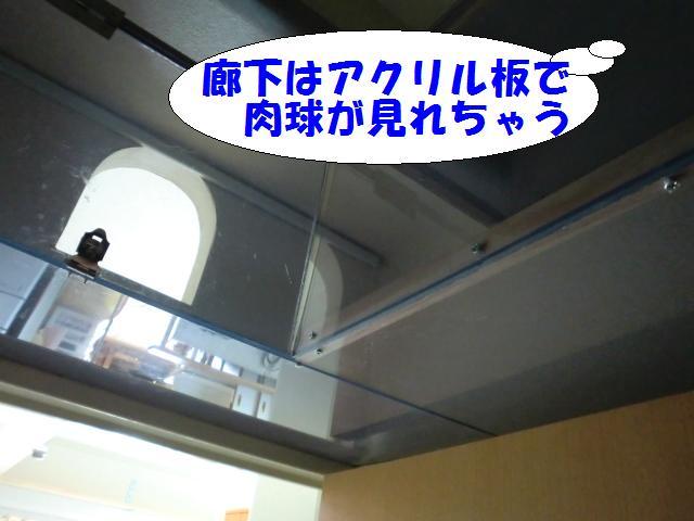 110110_6.jpg