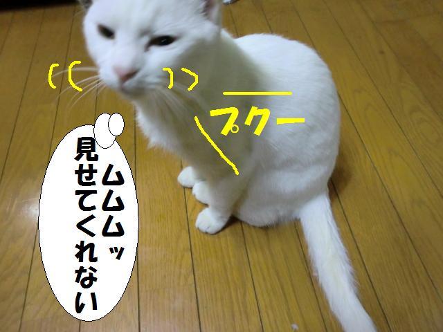 110113_3.jpg