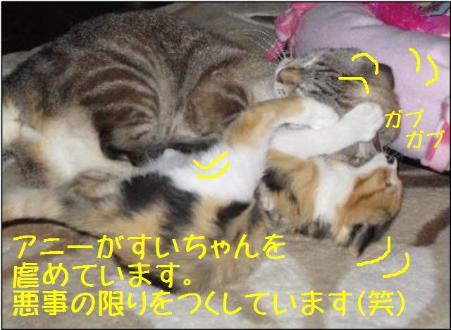 アニーとすいちゃん101228_2a
