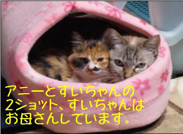 アニーとすいちゃん101228_1a