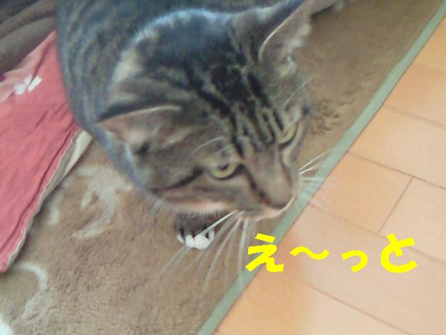 20110216_3つくし
