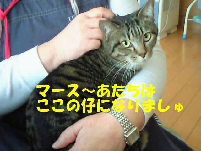 20110216_2つくし