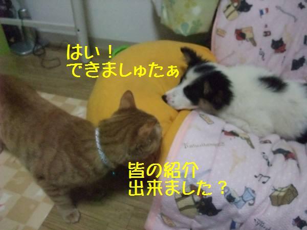 DSCF0188.jpg