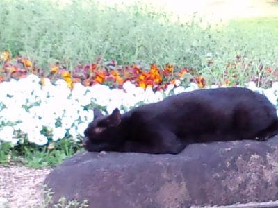 大仙公園の猫20120427_400