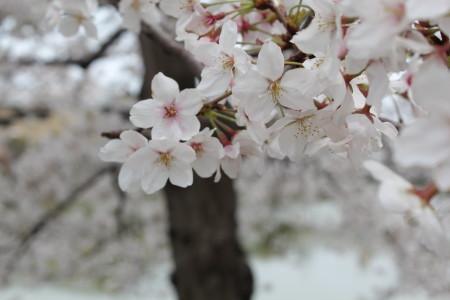 2012_04_10_0134_1.jpg