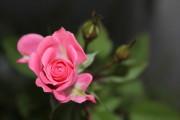 2012_05_19_0183_1.jpg