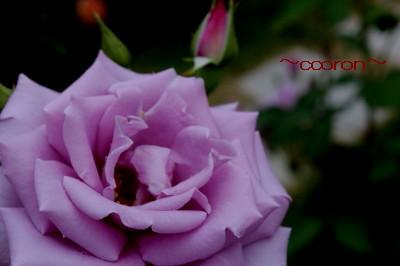 2012_05_22_0225_1.jpg