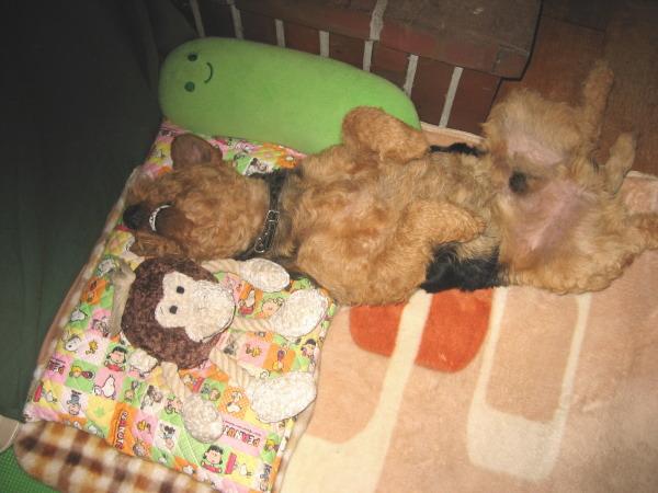 サルと一緒におやすみ~2