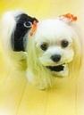 iphone画像2012.3.20 085 - コピー