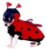 ladybugcostumethumb_20121026084209.jpg