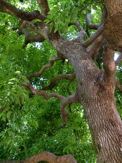 吉方公園の木1