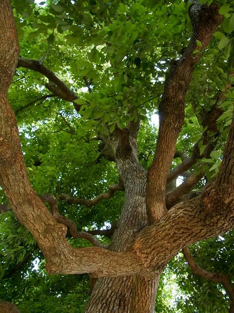 吉方公園の木2
