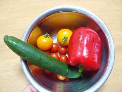 2014夏収穫物&植物①