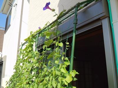 2014夏収穫物&植物⑧