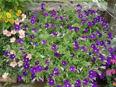 2014夏収穫物&植物⑩