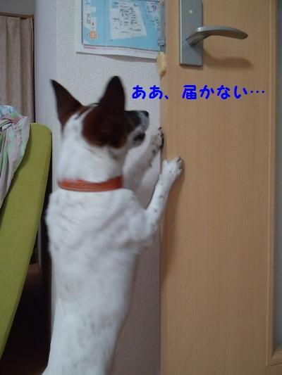 20140904マグネット④