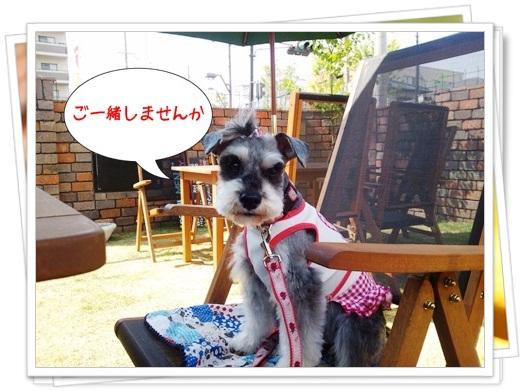 2012_0512_144537-DSC_0519.jpg