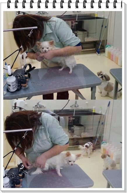 cats588.jpg