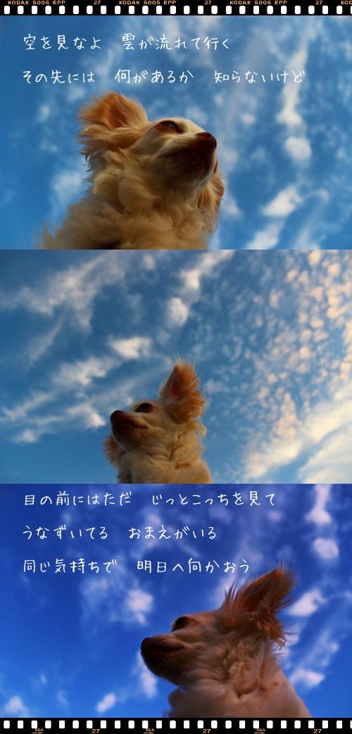 cats5888.jpg
