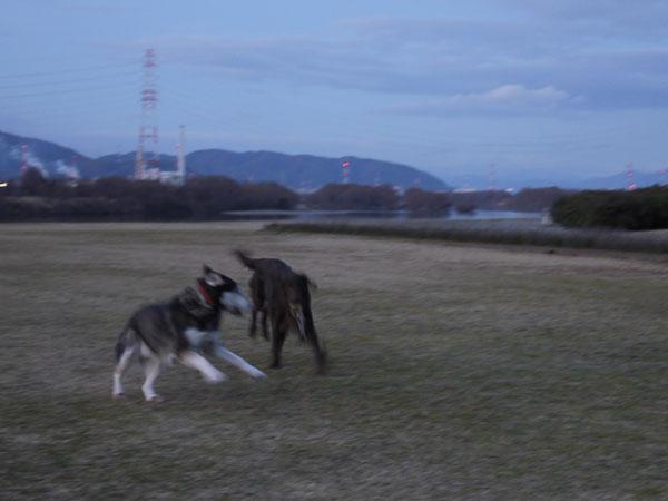 20110113お散歩5