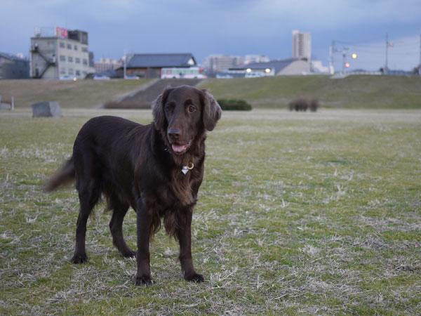 20110113お散歩2