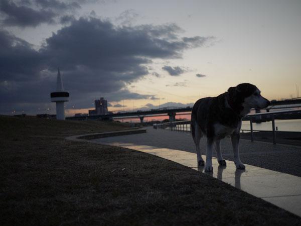 20110113お散歩4
