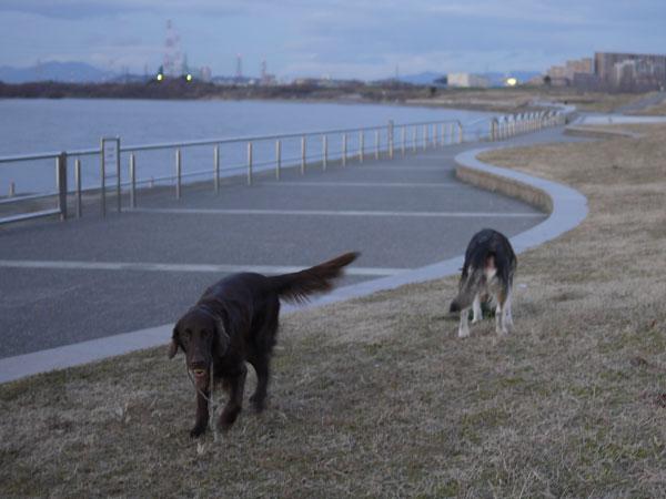 20110113お散歩3