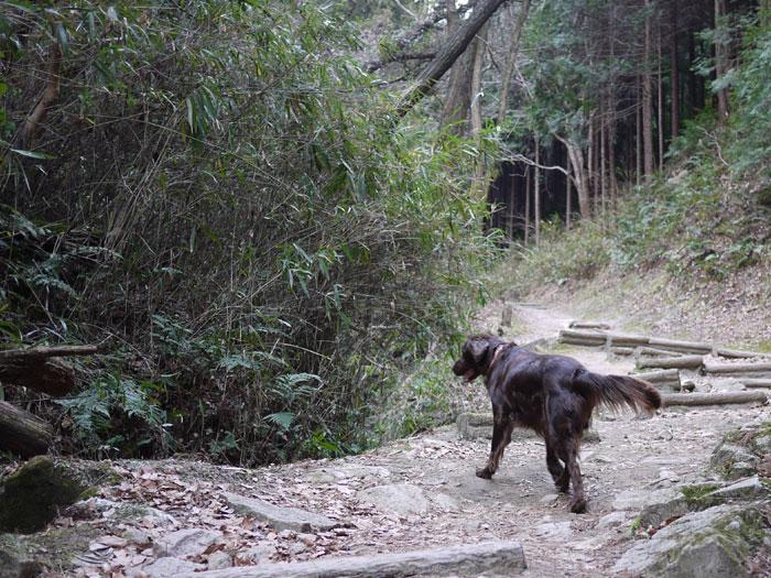 20110125お散歩1