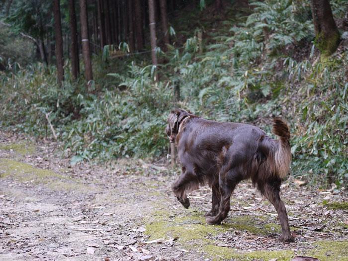 20110125お散歩2