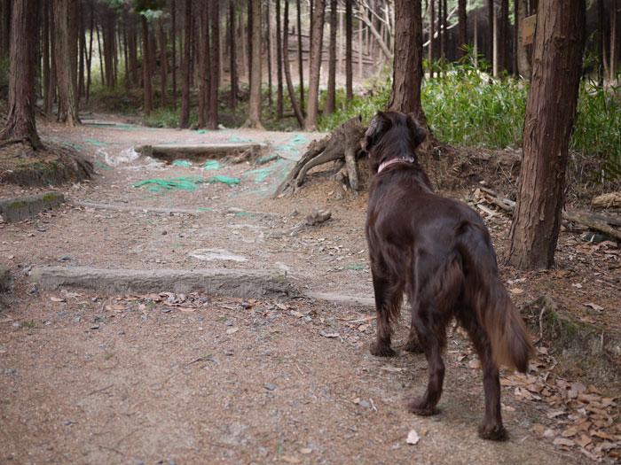 20110125お散歩3