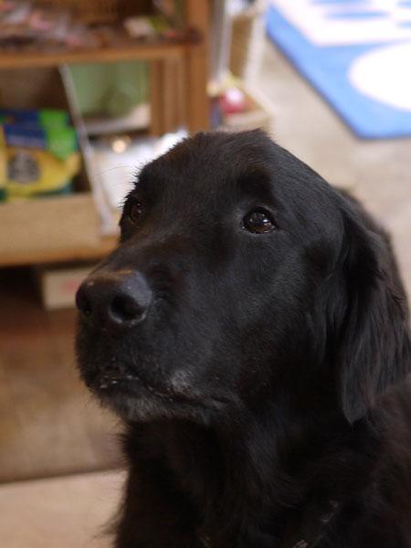 20110228dog1